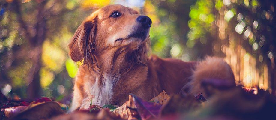 Morosidad en las clínicas veterinarias